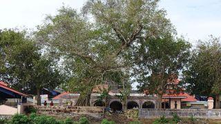 Valiya Arattu